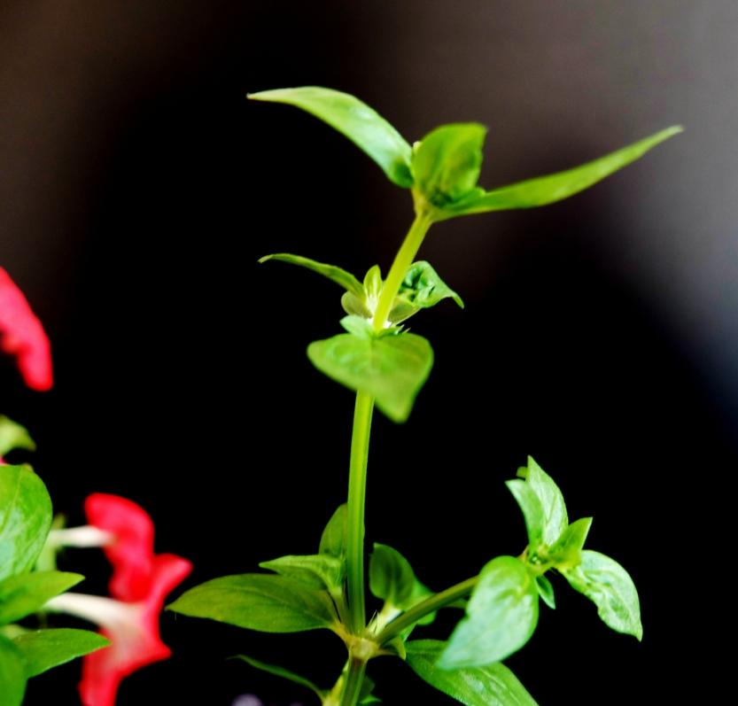 plant4_1