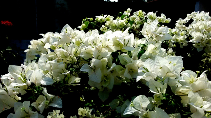 white20flowers
