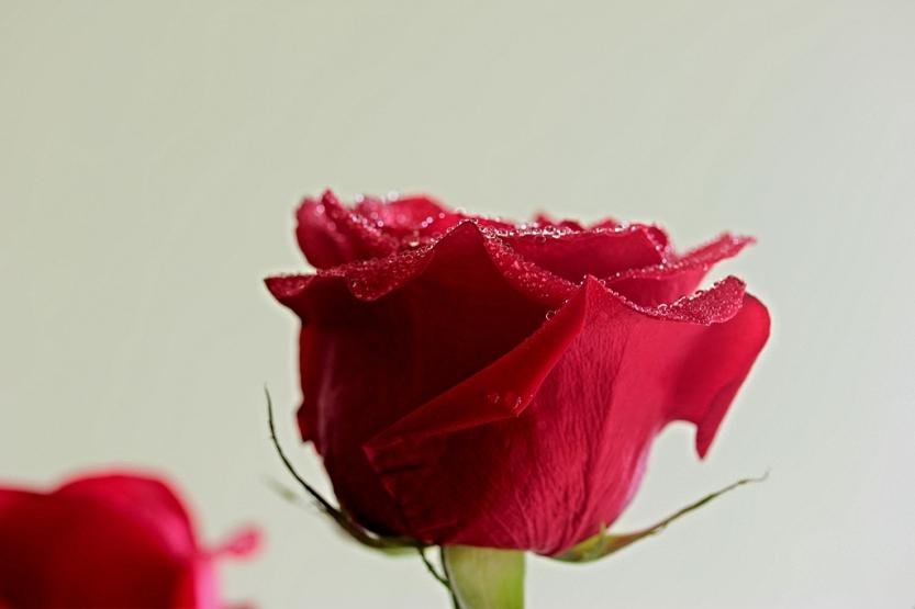 red20rose