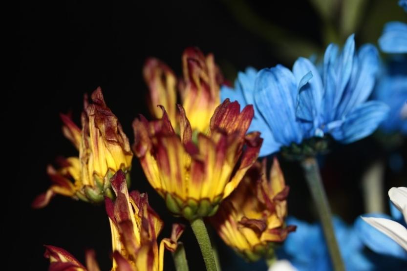 flower16_1