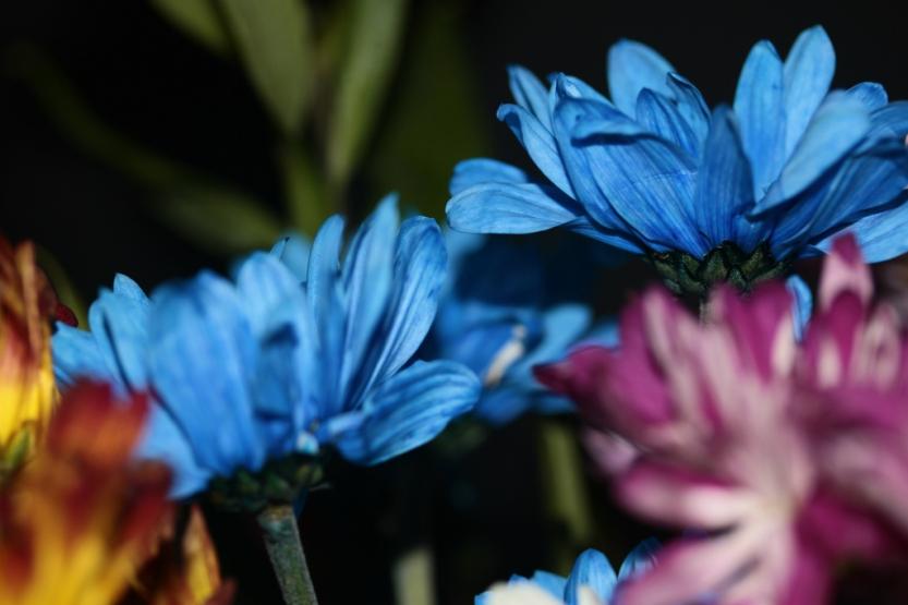 flower18