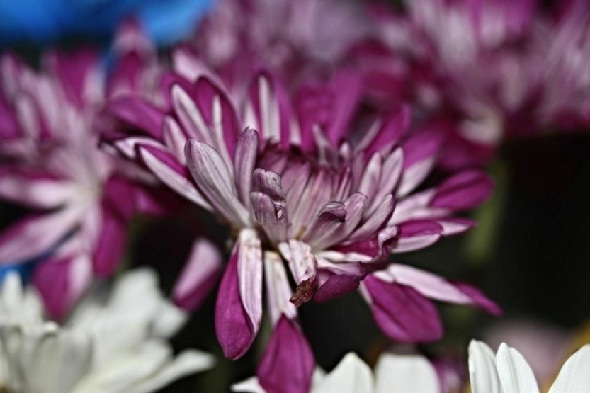 flower8_3