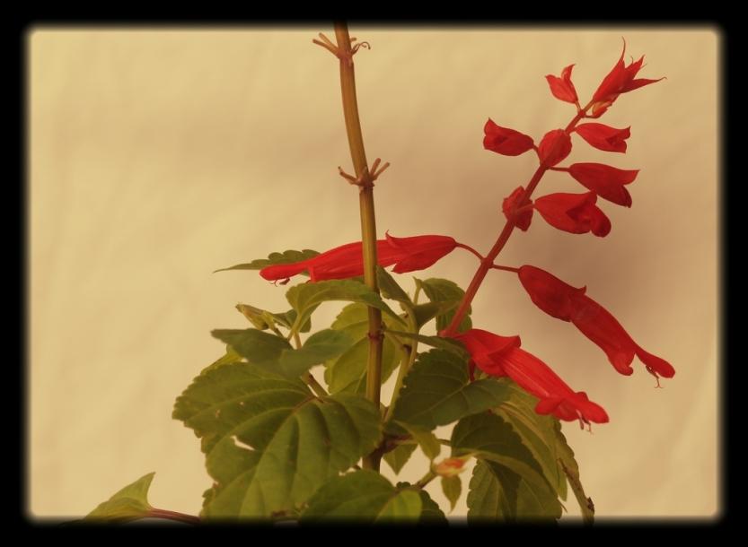 red20flower2
