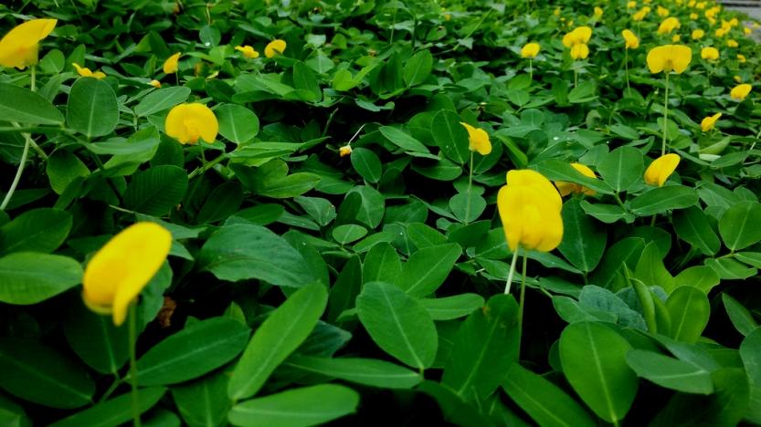 yellow20flowers2