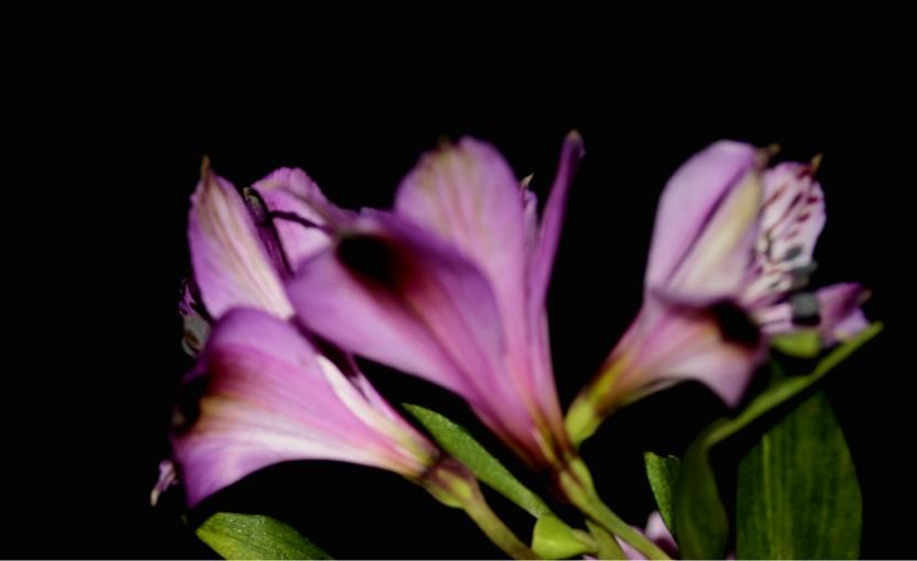 edited20flowers5