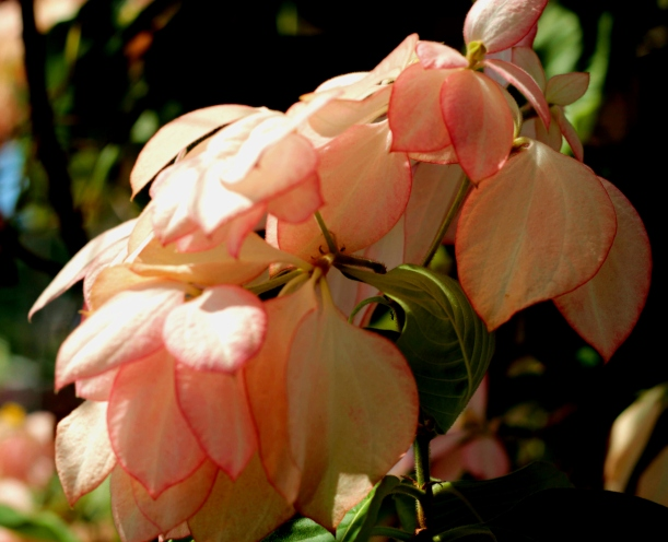 soft-pink-flower