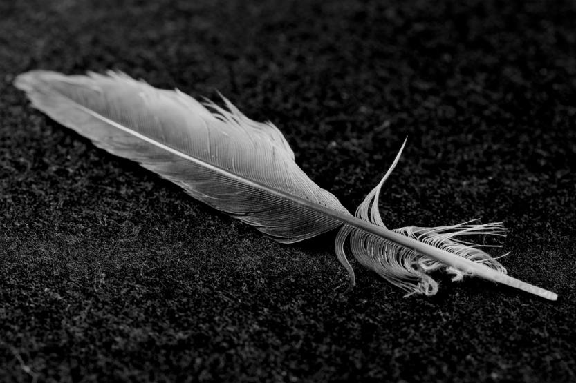 feather20monochrome