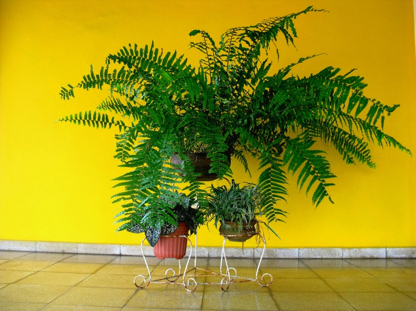 fern-and-other-plants