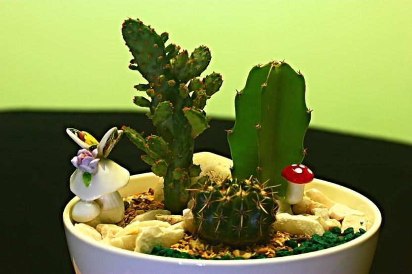 cactus1_1