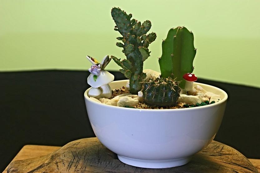 cactus2_1