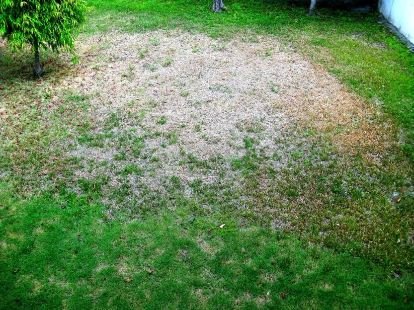 dry20grass