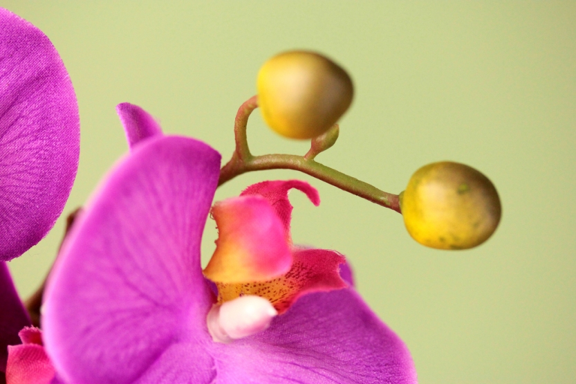 orchid2_1