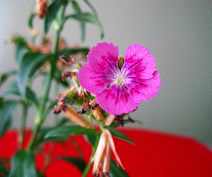 red20flower_1