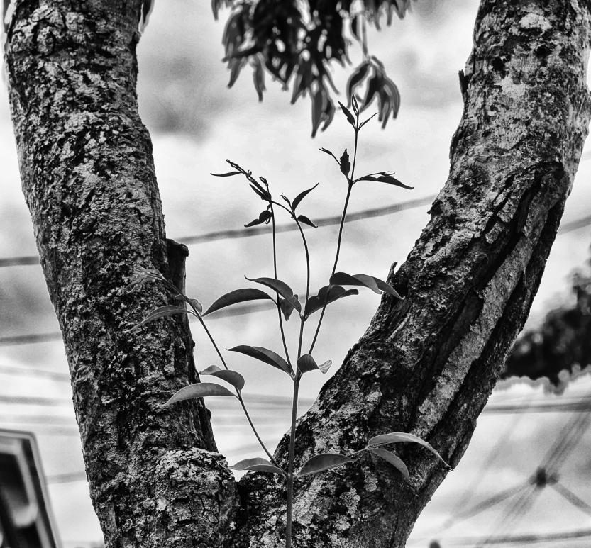 Framed Branch