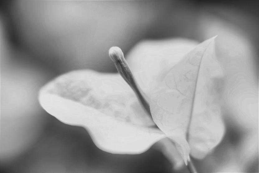 Dreamy White Veranera