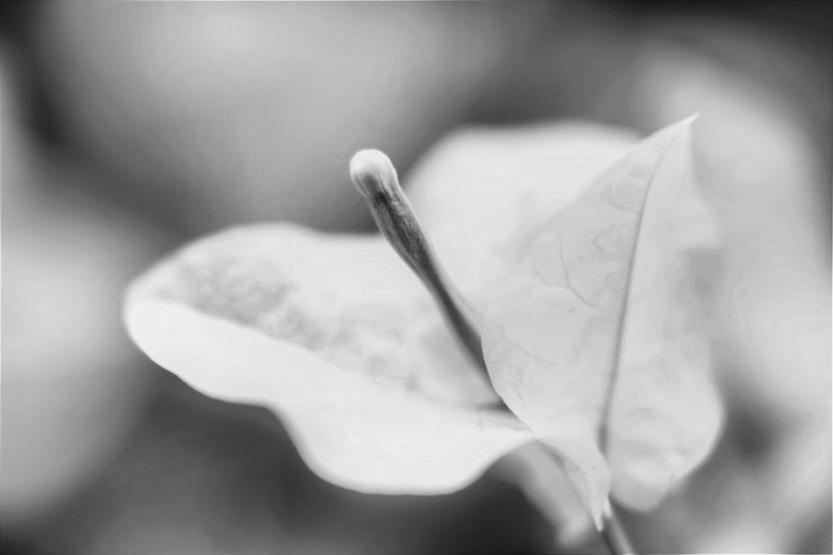 Dreamy White Veranera2